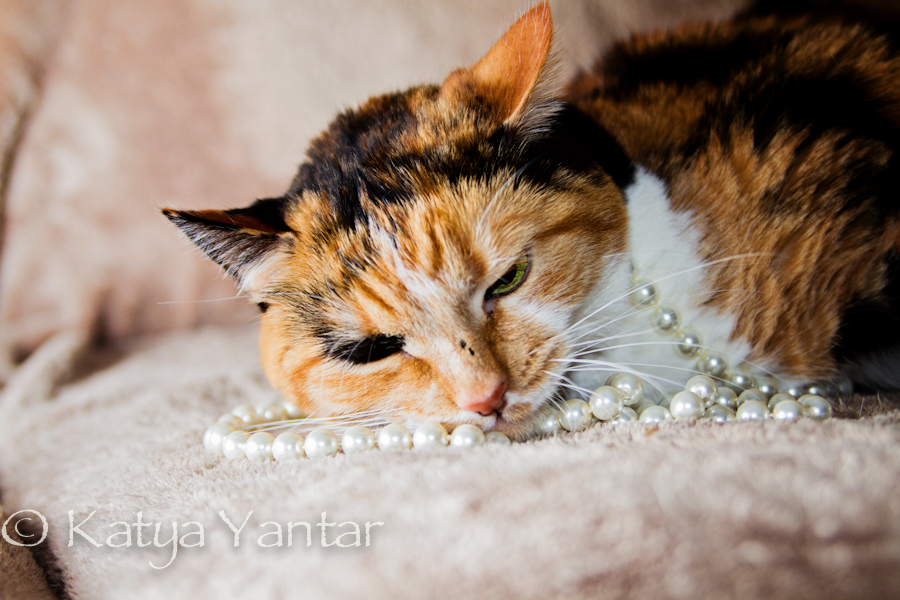 Cat with pearl necklace